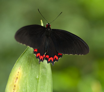 Butterfly Conservatory April - 16