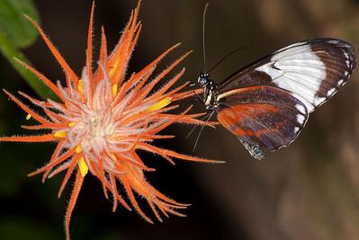 Butterfly Conservatory April - 04