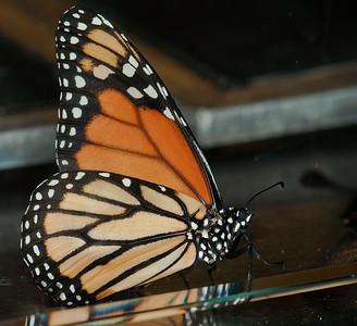 Butterfly Conservatory April - 03