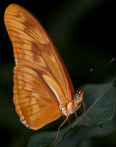 Butterfly Conservatory April - 05
