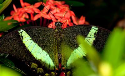 Butterfly Conservatory April - 14