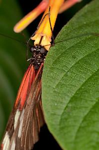 Butterfly Conservatory April - 06