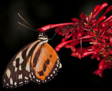 Butterfly Conservatory April - 09