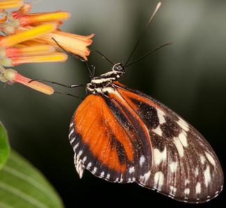 Butterfly Conservatory April - 08