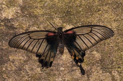 Butterfly Conservatory April - 01