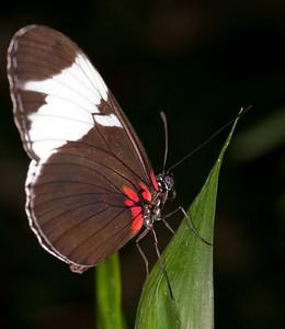 Butterfly Conservatory April - 22