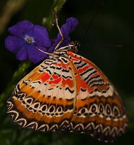Butterfly Conservatory April - 11