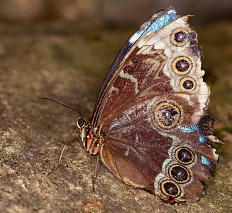 Butterfly Conservatory April - 21