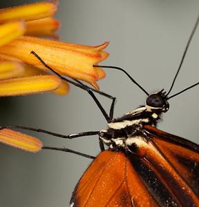 Butterfly Conservatory April - 07