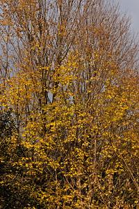 2011-11-02 - Pomona Park - 10