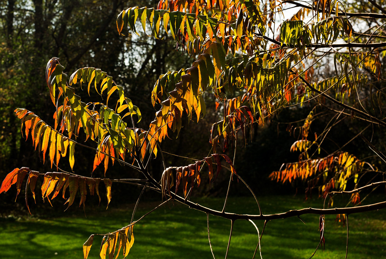 2011-11-02 - Pomona Park - 11