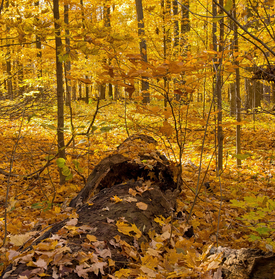 2011-11-04 - Thornhill Woods - 13