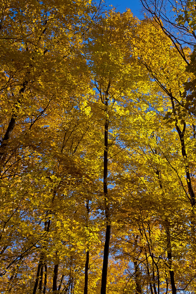 2011-11-04 - Thornhill Woods - 15