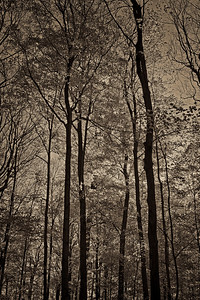 2011-11-04 - Thornhill Woods - 07