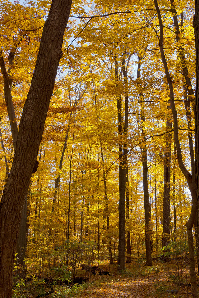 2011-11-04 - Thornhill Woods - 12