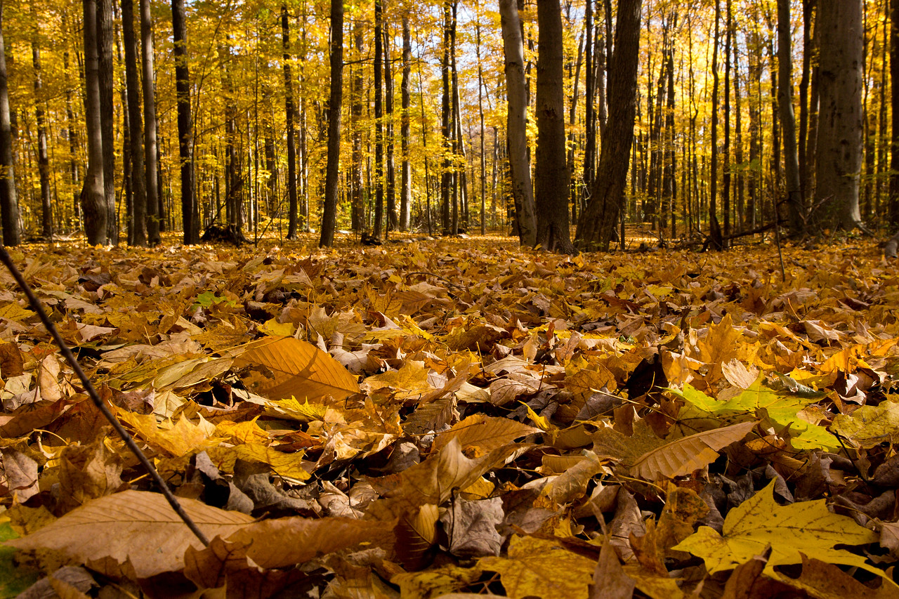 2011-11-04 - Thornhill Woods - 04