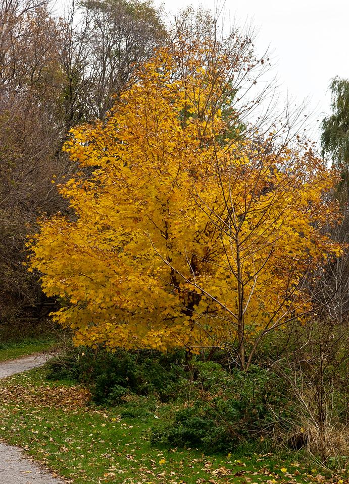 2011-11-02 - Pomona Park - 26