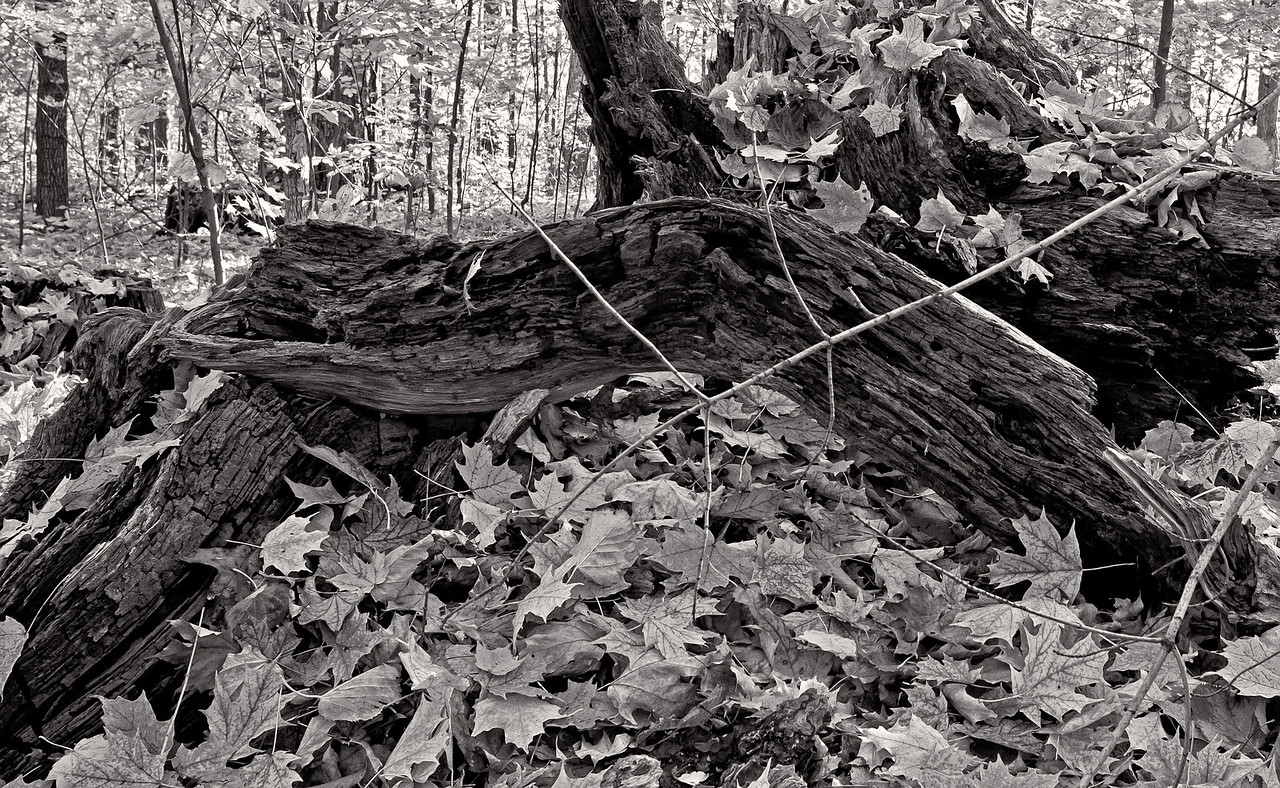2011-11-04 - Thornhill Woods - 21
