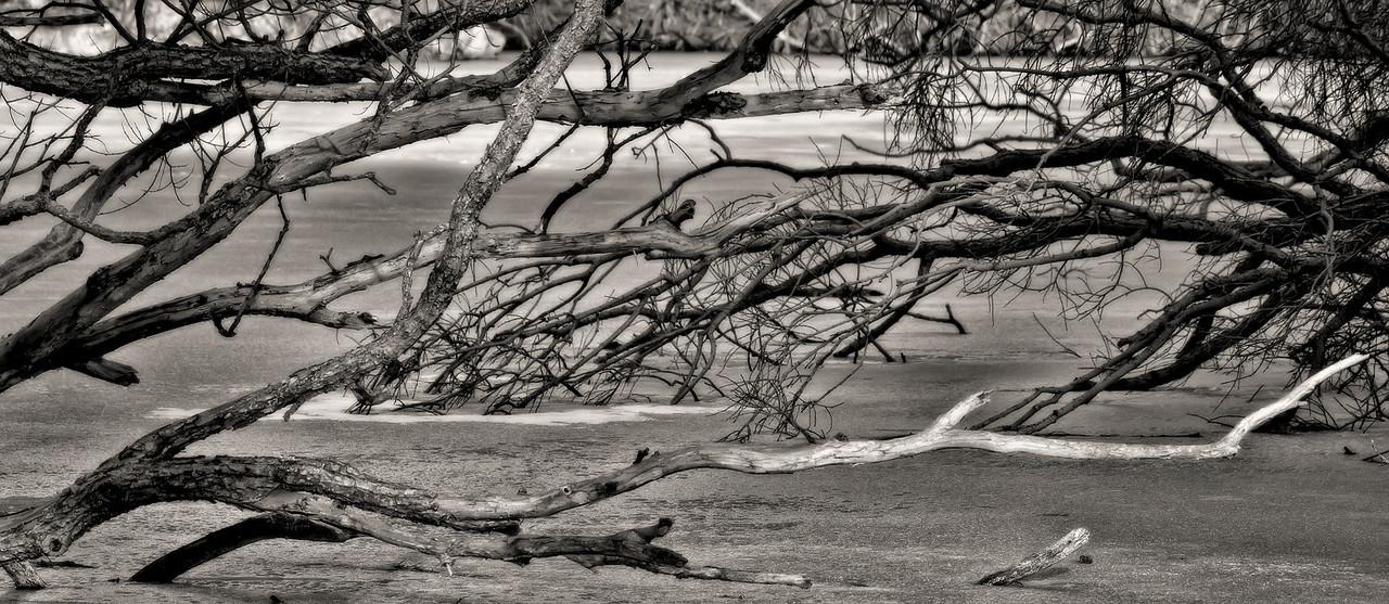 2012-02-19 - High Park - 012