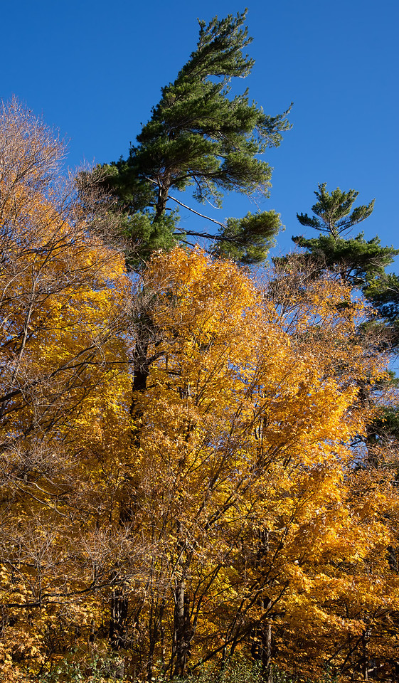 2011-11-04 - Thornhill Woods - 01