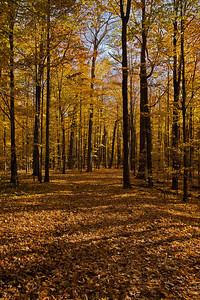 2011-11-04 - Thornhill Woods - 02