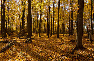 2011-11-04 - Thornhill Woods - 09
