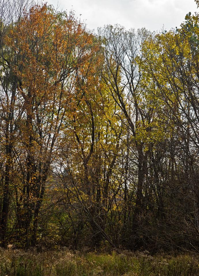 2011-11-02 - Pomona Park - 03
