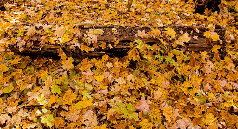 2011-11-04 - Thornhill Woods - 20