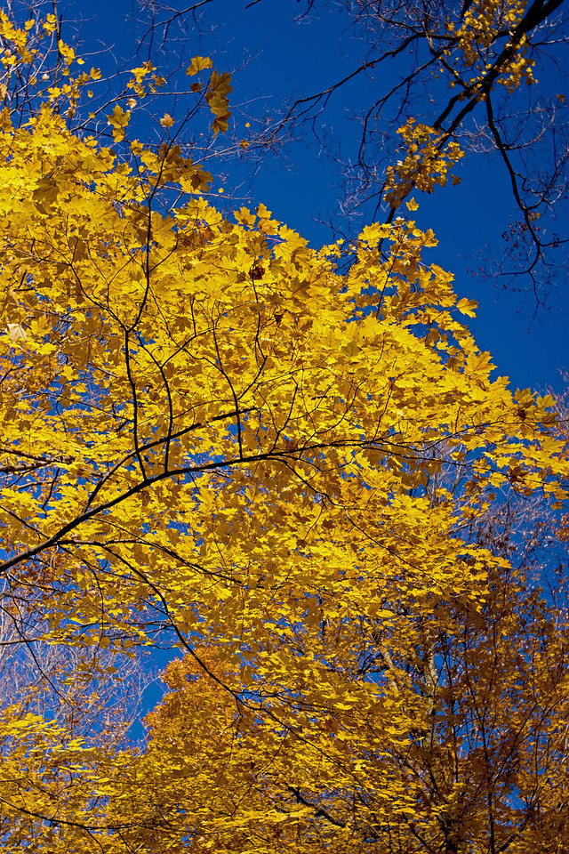 2011-11-04 - Thornhill Woods - 18