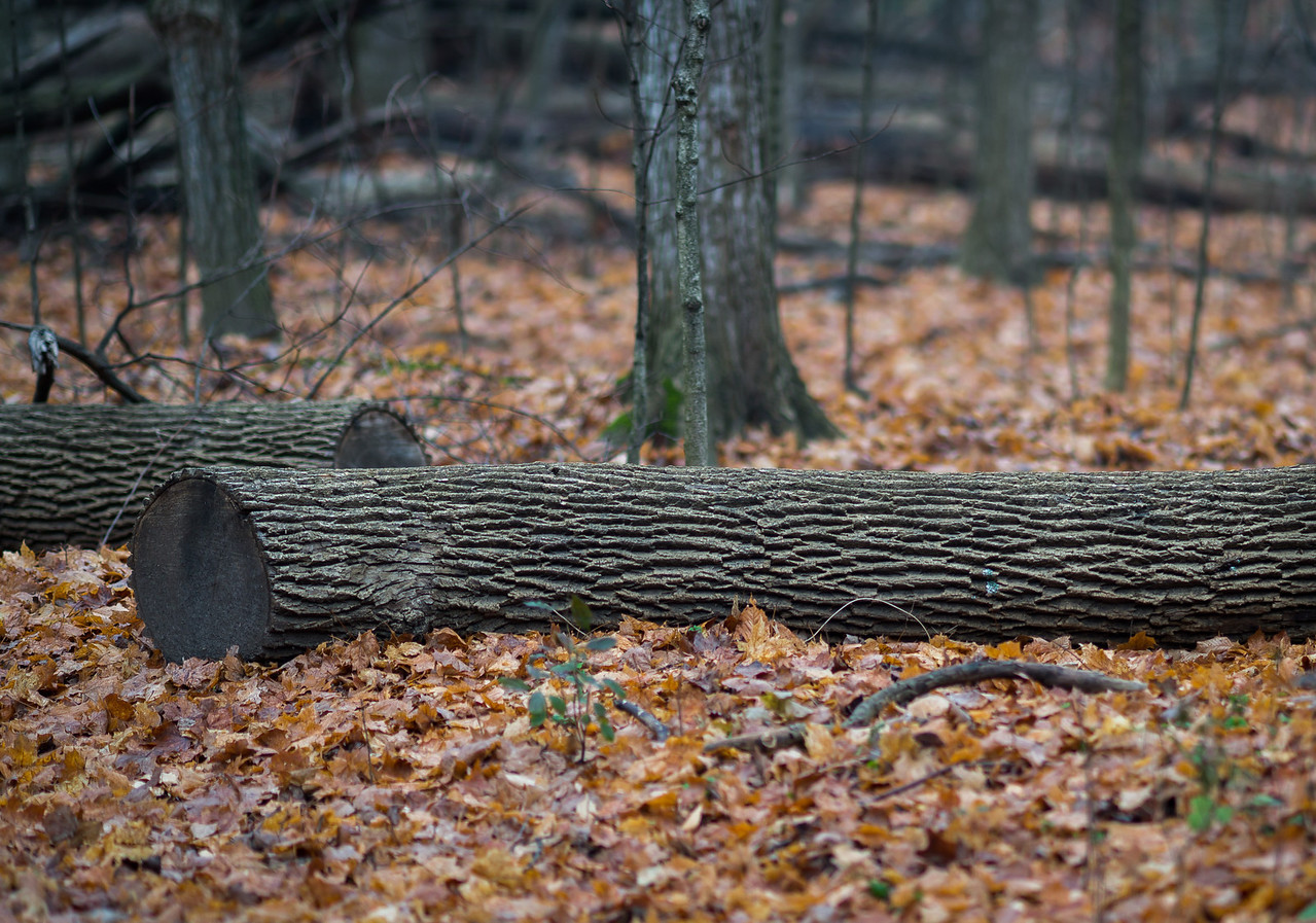 2012-11-20_Thornhill Woods_18