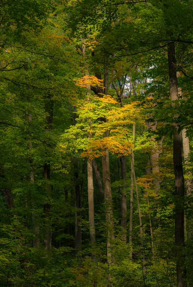2012-10-12 - Thornhill Woods Park - 61