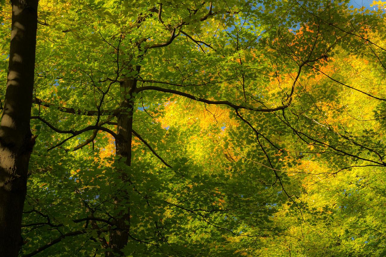 2012-10-12 - Thornhill Woods Park - 48