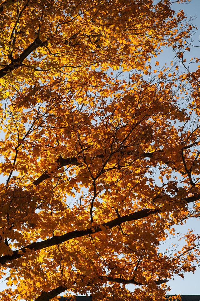 2012-10-12 - Thornhill Woods Park - 02
