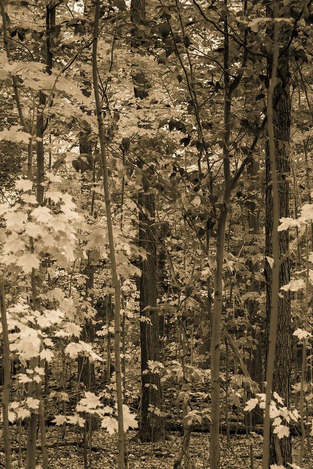 2012-10-17_Sagecrest_Pond_12