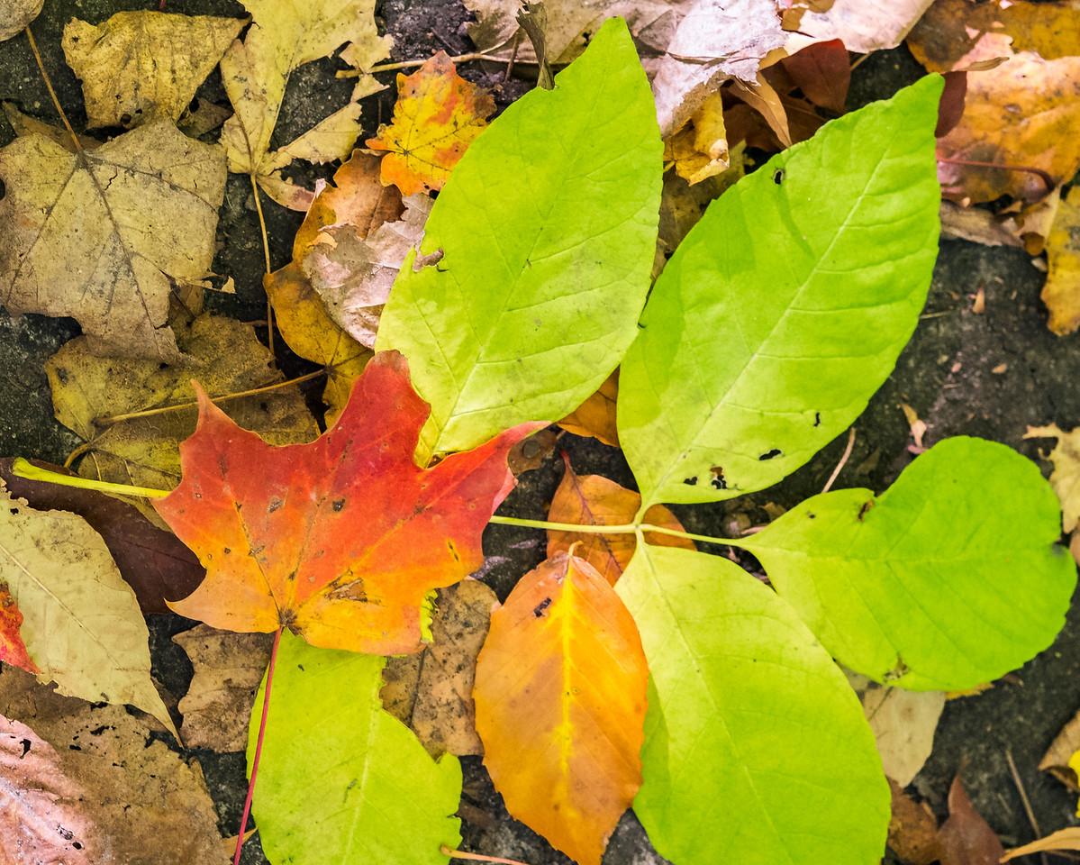 2012-10-12 - Thornhill Woods Park - 18