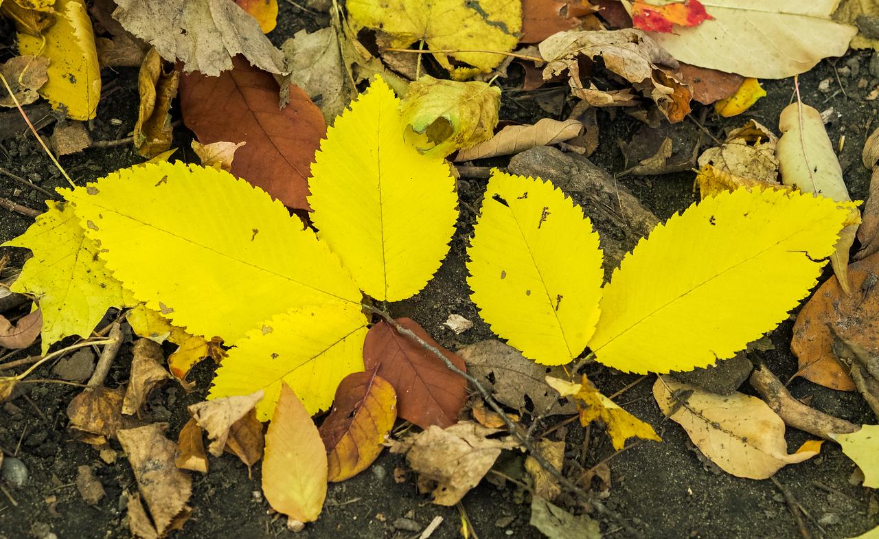 2012-10-12 - Thornhill Woods Park - 17