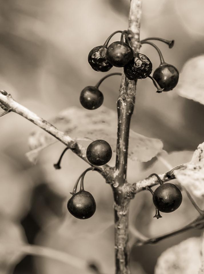 2012-10-17_Sagecrest_Pond_07