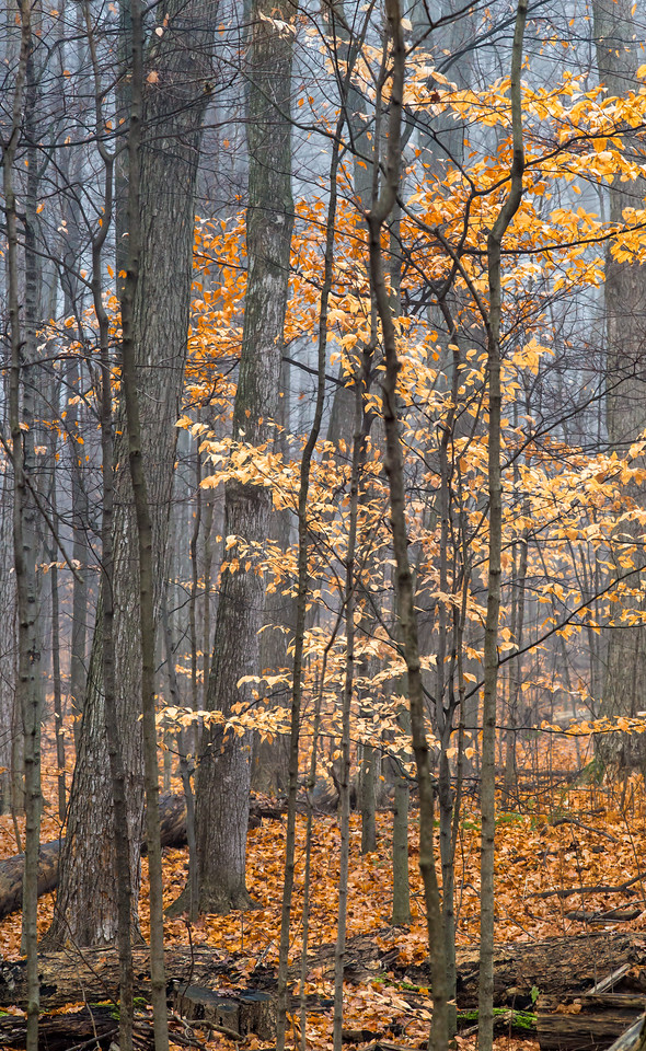 2012-11-20_Thornhill Woods_09