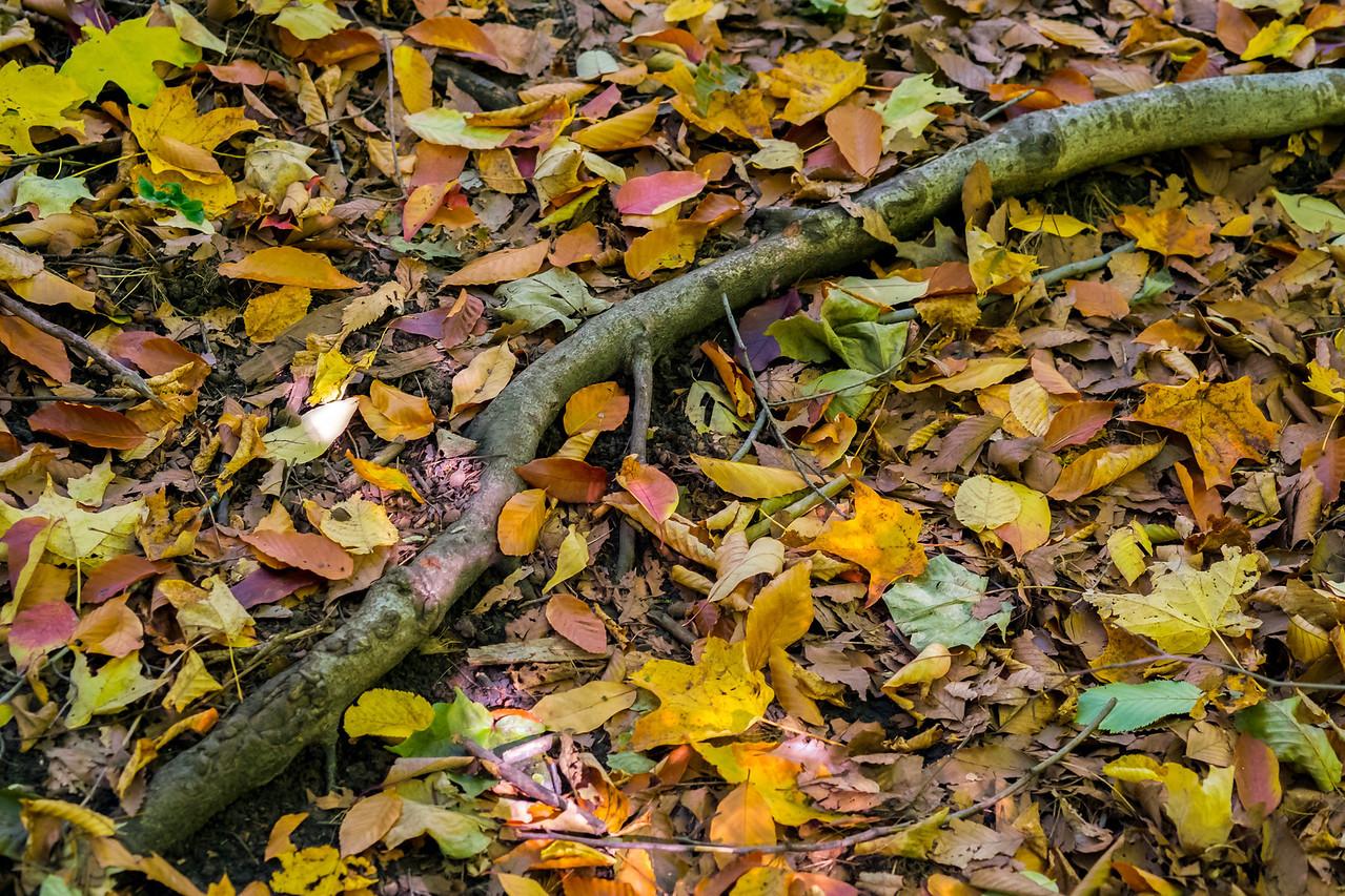 2012-10-12 - Thornhill Woods Park - 22