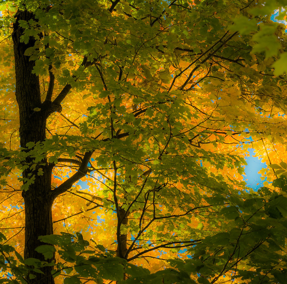2012-10-12 - Thornhill Woods Park - 47