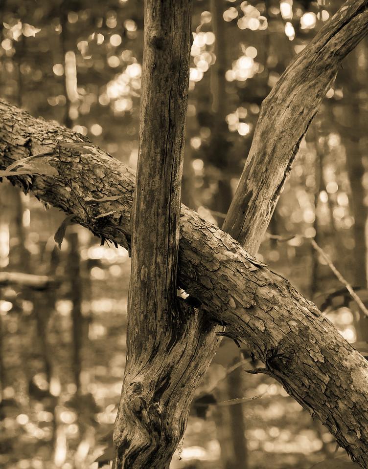2012-10-12 - Thornhill Woods Park - 24