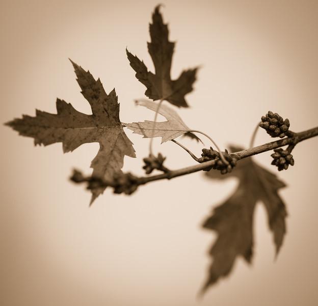 2012-11-11_Sagecrest_Pond_22