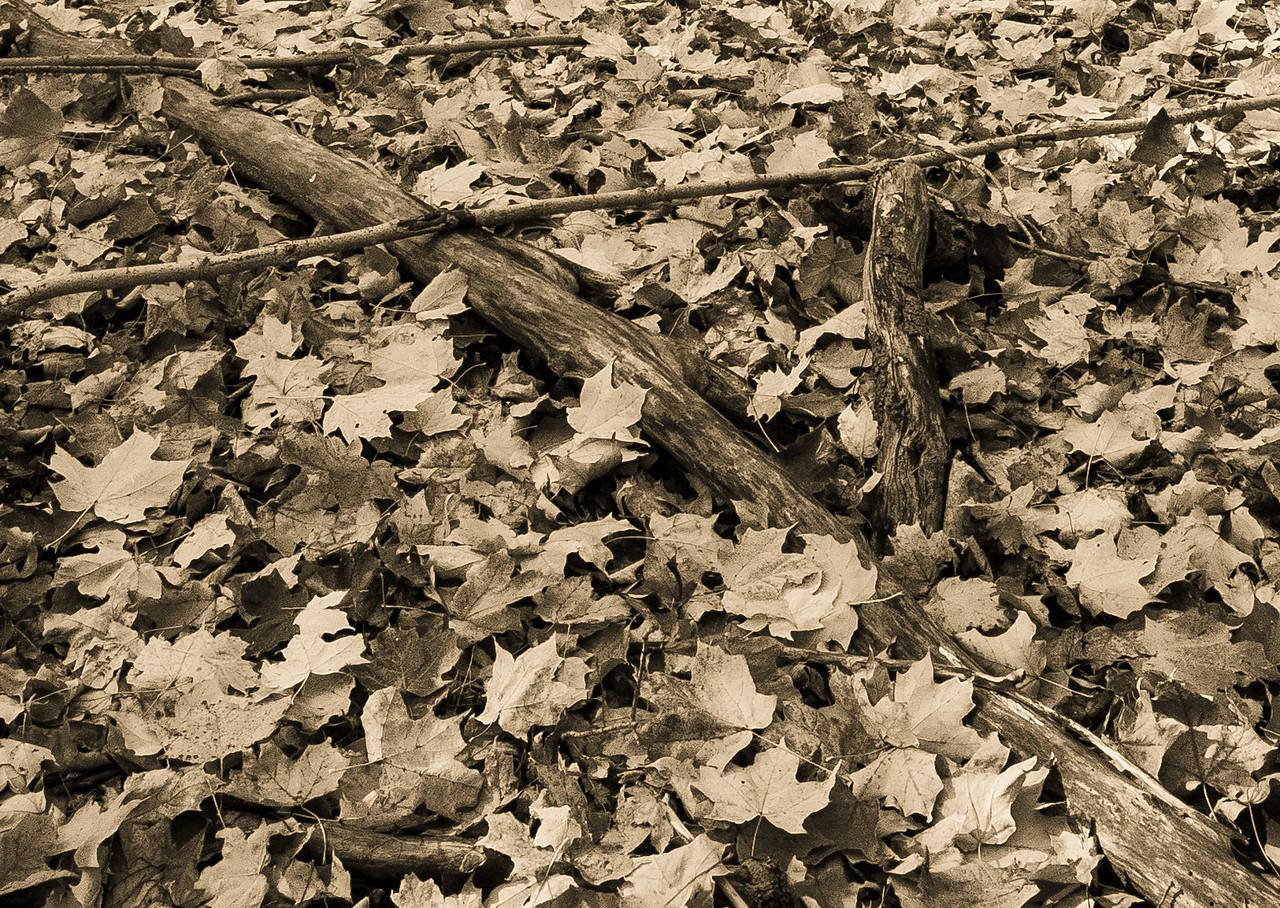2012-10-18_Sagecrest_Pond_09