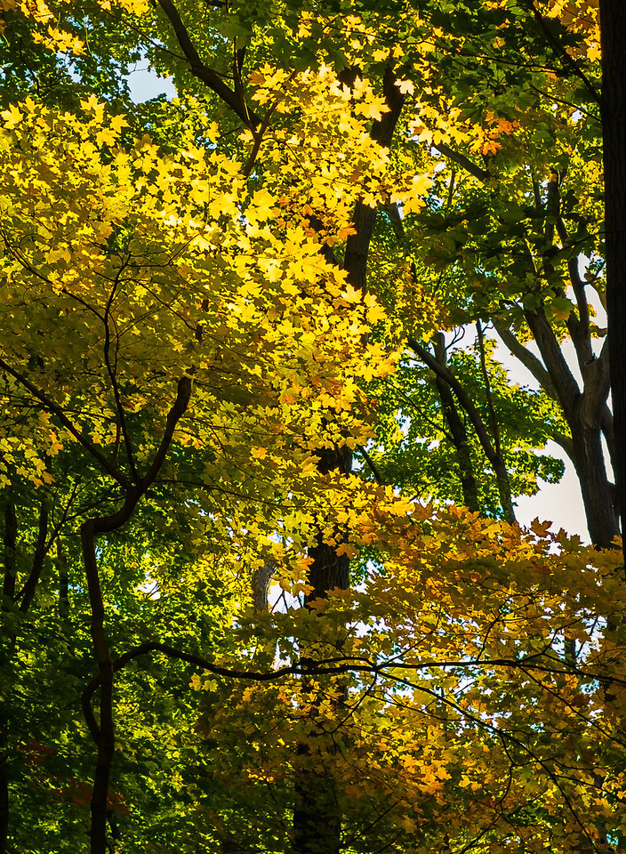2012-10-12 - Thornhill Woods Park - 06