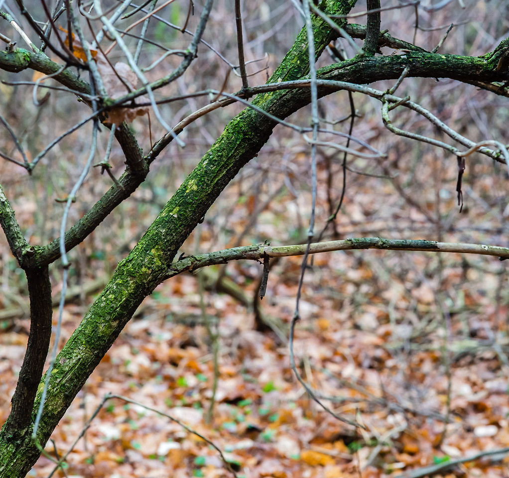 2012-11-20_Thornhill Woods_16