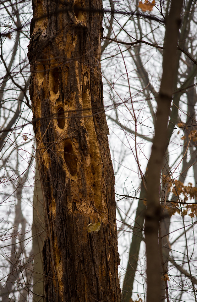 2012-11-20_Thornhill Woods_17