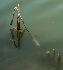 2012-11-11_Sagecrest_Pond_29