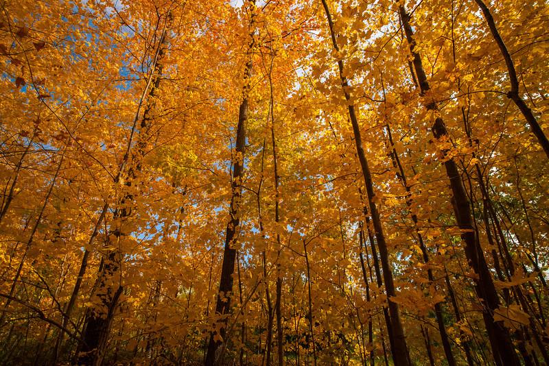2012-10-18_Sagecrest_Pond_10