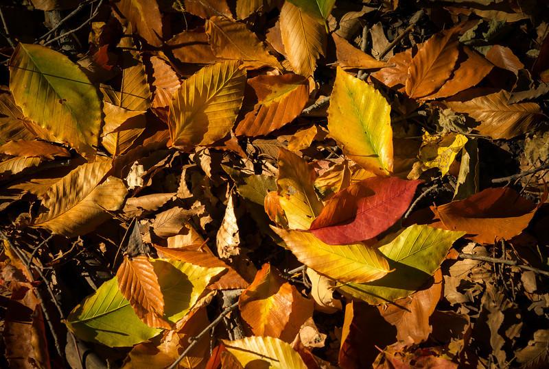 2012-10-12 - Thornhill Woods Park - 25