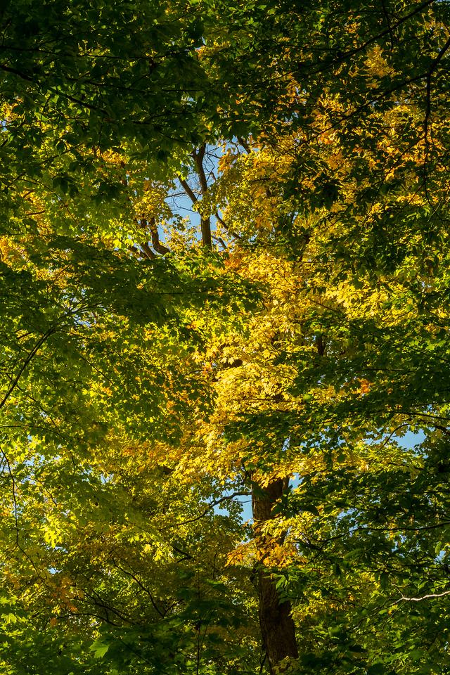 2012-10-12 - Thornhill Woods Park - 50
